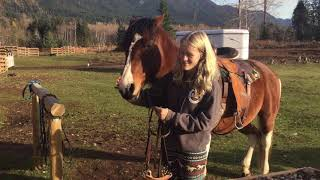 How to put a hackamore on a horse