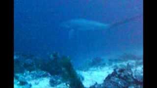 Malapasqua island & dykning med hajer