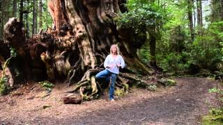 Vrksasana with the Largest Red Cedar in the World