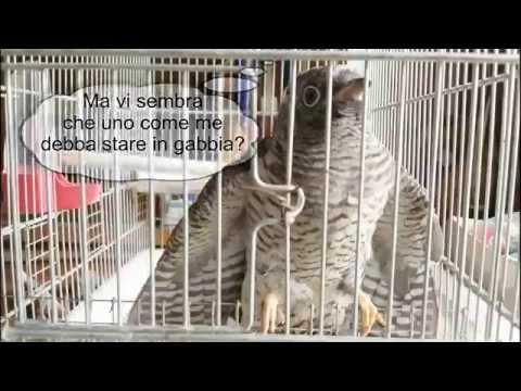 Ifa su helminths il prezzo Lipetsk