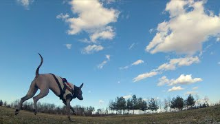 FPV Drones love to be chased by dogs - RAW Session 5