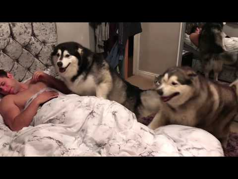 Milo and Niko the reunion after their first and only time apart! YouTube Exclusive,