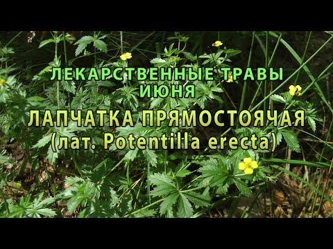 Лекарственные растения июня