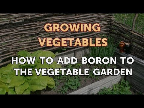 , title : 'How to Add Boron to the Vegetable Garden