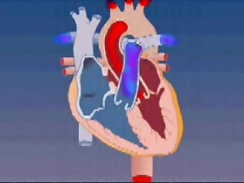 Tratamentul hipertensiunii arteriale medicamente Articolul 2