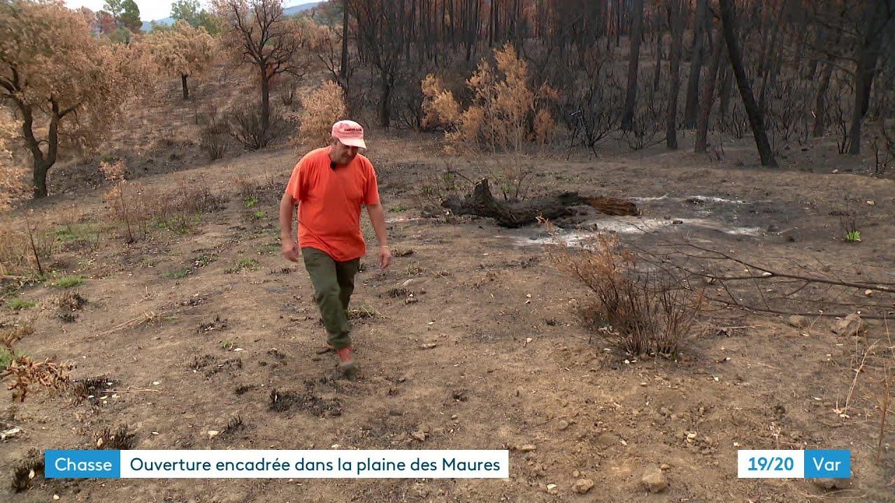 Chasse : une ouverture règlementée dans la plaine des Maures