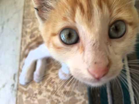 Che trattare vermi a piccoli gattini