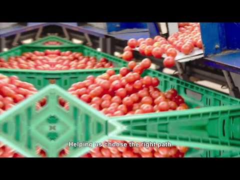 , title : 'O.P. Vittoria Tomatoes - growing tasty tomatoes in Sicily