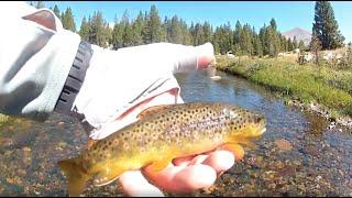 Fly Fishing on the Tuolumne River | Yosemite