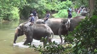 A Ride To Pusat Konservasif Gajah Kuala Gandah