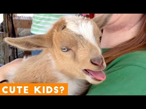 Cutest Baby Goat Video Ever
