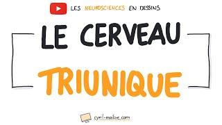 Vignette de [VIDÉO] LE CERVEAU TRIUNIQUE - Les neurosciences en dessins