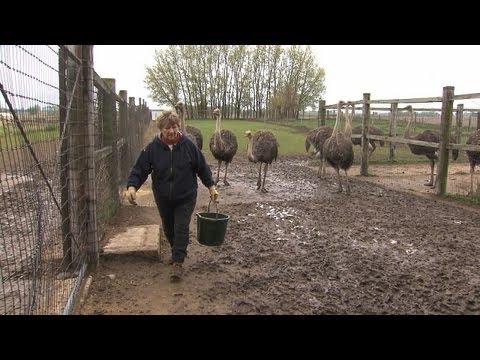 , title : 'Ostrich Farmer Helen Wall, Alden, Iowa