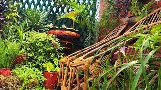August Short Update Ll Terrace Garden Plants Ll ♥️♥️ MYLILGARDEN♥️♥️