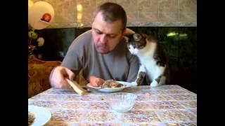 Кот ворует еду!