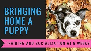 Bringing Home a Puppy: Training and Socialization at 8 Weeks