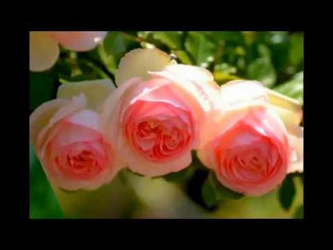 Для Тебя эти розы