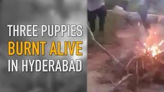 The Quint: Animal Cruelty: Three Puppies Burnt Alive in Hyderabad