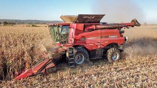 CORN harvest 2018 - Sklizňové služby Michal Horák - CASE IH Axial Flow 8240 + Case 4408F