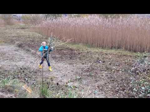 Welpen van de Osbornegroep doen mee aan natuurwerkdag in Biddinghuizen
