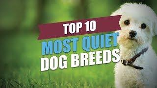 Top 10 Most Quiet Dog Breeds