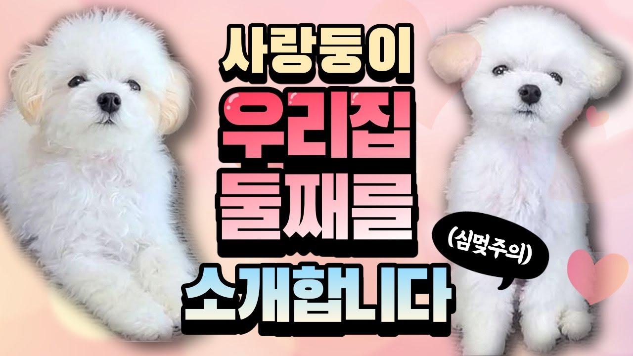 ♡귀여움주의♡ 조금 특별한 남매가 있다?! (feat. 방울이야기)