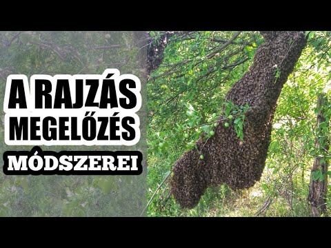 Szabadon élő laposférgek és paraziták