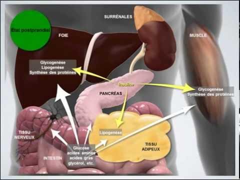 La médecine chinoise pour le type de diabète