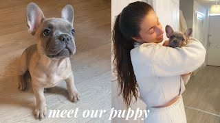 WE GOT A PUPPY! BRINGING HOME OUR 10 WEEK OLD FRENCHIE PUPPY | Blue Fawn French Bulldog