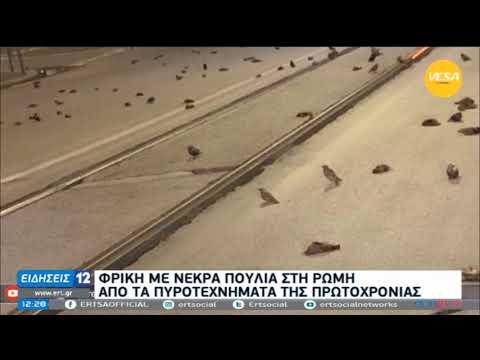 Ρώμη   Φρίκη με νεκρά πουλιά   02/01/2021   ΕΡΤ