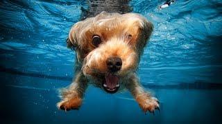 Приколы с собаками/  Смешные и забавные  Собаки