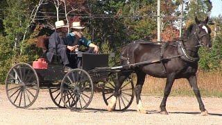 Amish families flourishing in eastern P.E.I.