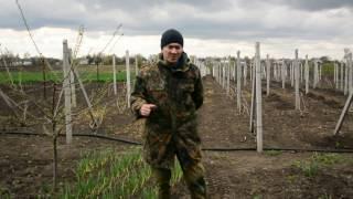Обработка винограда медным купоросом весной пропорции