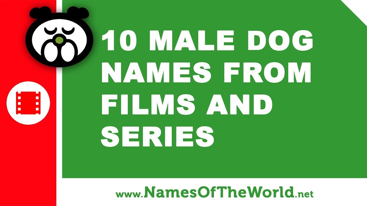 10 male dog names from films and series -  the best pet names - www.namesoftheworld.net