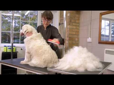 Cepillos de muda FURminator para perros