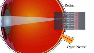 Newswise:Video Embedded an-artificial-retina-engineered-from-ancient-protein-heads-to-space