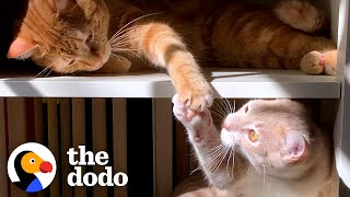 Cat Hates His New Kitten Brother And Hisses At Him Until...💓 | The Dodo Cat Crazy