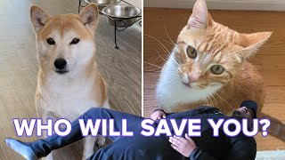 """Cats And Dogs React To Their Owners """"Playing Dead"""" thumbnail"""