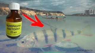Почему рыба клюет у нее же нет клюва