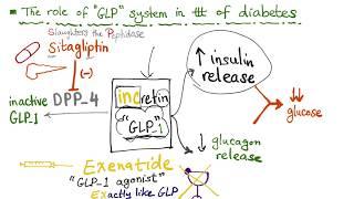 Glucagon-like Peptide (GLP-1) and the treatment of diabetes; Exenatide and Sitagliptin