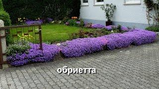 Почвопокровные растения видео