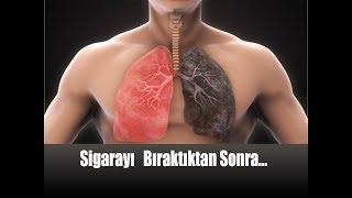 Sigarayı Bırakanların Vücutlarında Neler Oluyor? / Sigarayı Bıraktıktan Sonra Vücut
