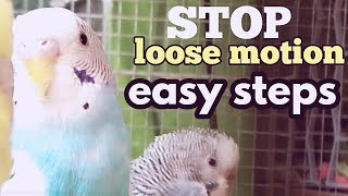 Sumner care of budgies - how to treat loose motion properly