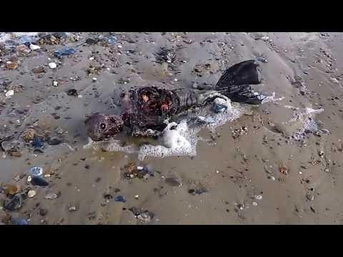 जलपरियों का रहस्य    Mystery of Mermaid In Hindi    जल परी का पूरा रहस्य    Jalpari found in India
