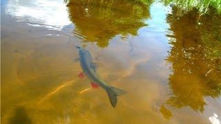 Рыбалка в брянской области спиннинг