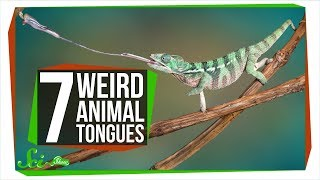 7 Animals with Really Wild Tongues