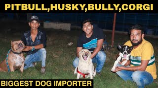 BIGGEST DOG IMPORTER IN INDIA | Buy Dog From Impoter | PRATEEK KUMAR