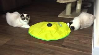 Mauws en Mimi spelen met Cats Meow