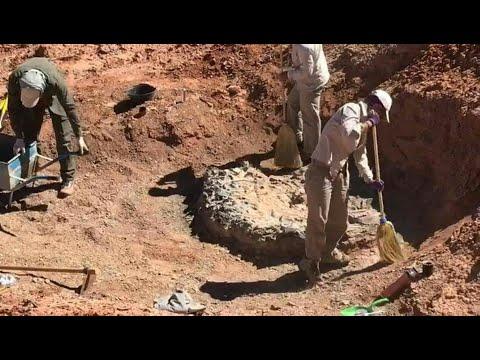 العرب اليوم - شاهد: اكتشاف مقبرة ديناصورات تعود إلى 220 مليون سنة في الأرجنتين