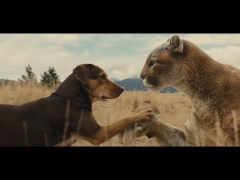 狗狗将失去母亲的美洲狮养大,再次相遇时,美洲狮救了狗妈妈一命